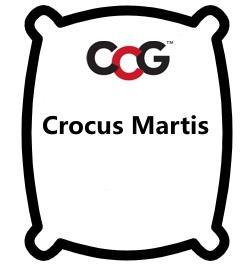 Crocus Martis