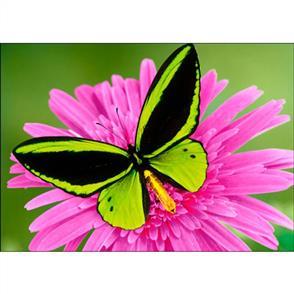 Collection D'Art Diamond Art Kit - Butterfly 27x38cm