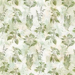 Hoffman Fabric  - Botanical Drawings - HERB
